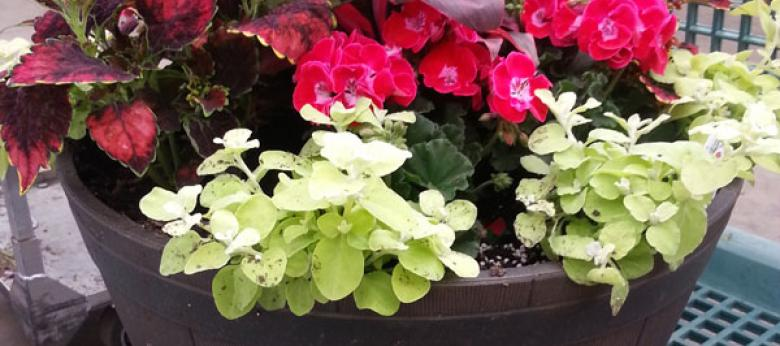 Garden Barn Custom Spring Summer Planter