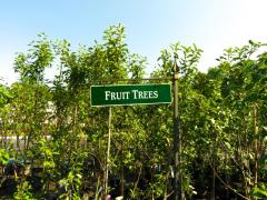 Garden Barn Fruit Trees
