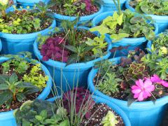 Garden Barn Grown Colorful Planters