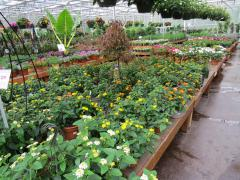 Garden Barn Grown Summer Annuals