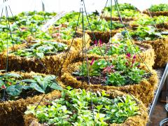 Garden Barn Grown Hanging Baskets in Production