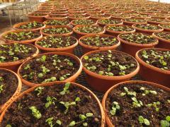 Garden Barn Annual Planting